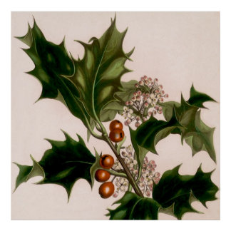 Holly berries posters