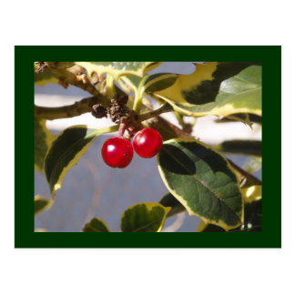 Holly Berry Postcard