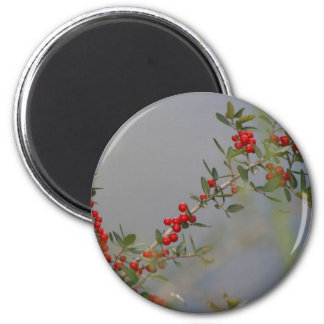 Holly berry stem against grey background 2 inch round magnet
