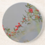 Holly berry stem against grey background drink coasters