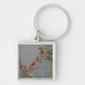 Holly berry stem against grey background keychain