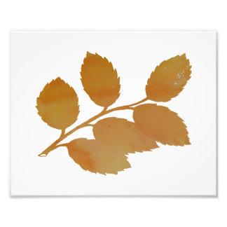 Holly branch photo print