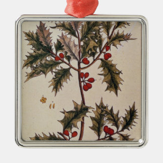 Holly from 'A Curious Herbal', 1782 Metal Ornament