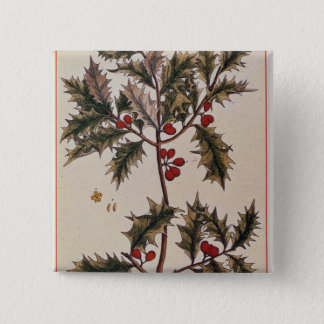 Holly from 'A Curious Herbal', 1782 Pinback Button