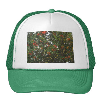 Holly Hat