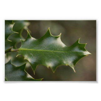 Holly Leaf Photo Print