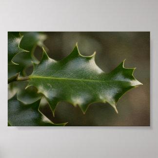 Holly Leaf Poster