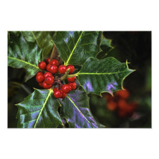 Holly Leaves and Berries Photo Print
