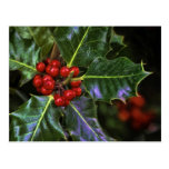Holly Leaves and Berries Postcard