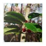 Holly Leaves I Holiday Christmas Nature Botanical Ceramic Tile