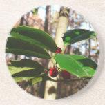Holly Leaves I Holiday Christmas Nature Botanical Drink Coaster