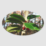 Holly Leaves I Holiday Christmas Nature Botanical Oval Sticker