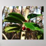 Holly Leaves I Holiday Christmas Nature Botanical Poster