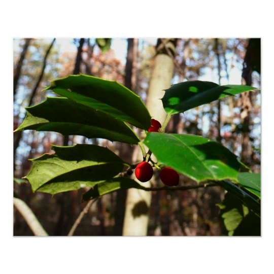 Holly Leaves I Holiday Christmas Nature Botanical Poster