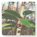 Holly Leaves I Holiday Christmas Nature Botanical Stone Coaster
