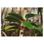Holly Leaves I Holiday Christmas Nature Botanical Wood Poster