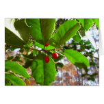 Holly Leaves II Holiday Nature Botanical Card