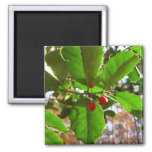 Holly Leaves II Holiday Nature Botanical Magnet