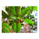 Holly Leaves II Holiday Nature Botanical Photo Print