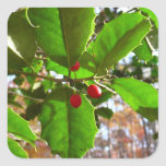 Holly Leaves II Holiday Nature Botanical Square Sticker