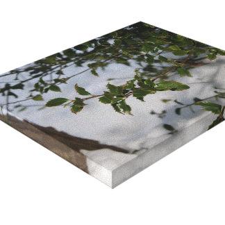 holly plant canvas print