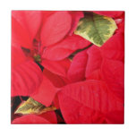 Holly Point Poinsettias Christmas Holiday Floral Ceramic Tile