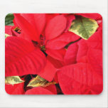 Holly Point Poinsettias Christmas Holiday Floral Mouse Pad