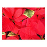 Holly Point Poinsettias Christmas Holiday Floral Photo Print
