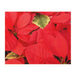 Holly Point Poinsettias Christmas Holiday Floral Wood Wall Art