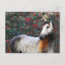 """Holly"" Postcard"