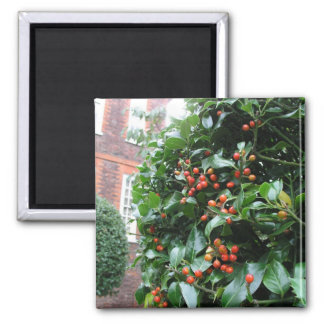 Holly tree 2 inch square magnet
