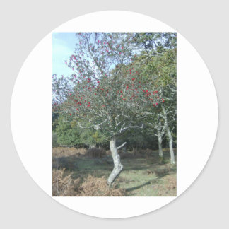 holly tree in New Forest Classic Round Sticker