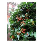 Holly tree post card