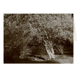 Holly Tree - Sepia Greeting Card