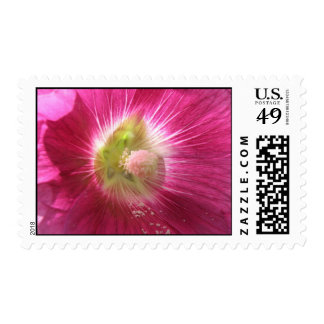 Hollyhock Deep Pink Postage Stamp