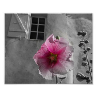 Hollyhock on the Ile de Re France Poster