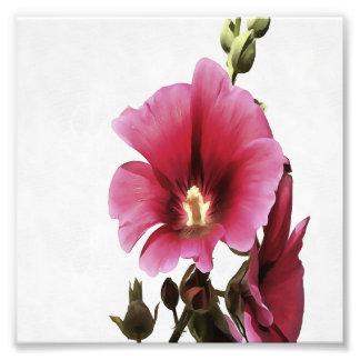 Hollyhock rosado fotografías