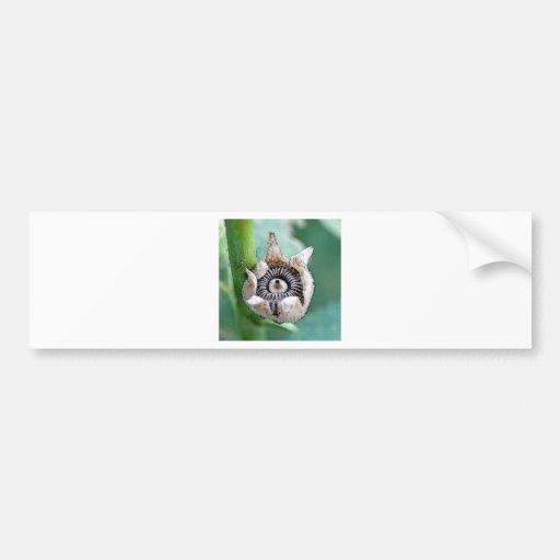 Hollyhock  Seeds Bumper Sticker