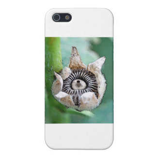 Hollyhock  Seeds Cases For iPhone 5