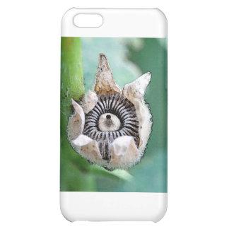 Hollyhock  Seeds iPhone 5C Cases