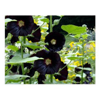 Hollyhocks negros tarjetas postales
