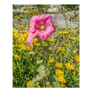 Hollyhocks rosados perfectos (Althaea) Cojinete