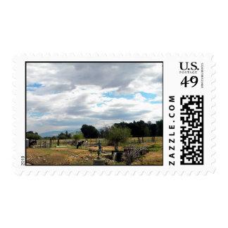 Holstein At Dolphin Pond Stamp