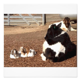 Holstein calf with triplet baby goats photo art