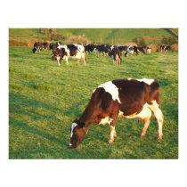 Holstein cattle flyer
