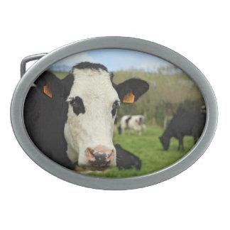 Holstein cattle oval belt buckle