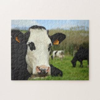 Holstein cattle puzzle