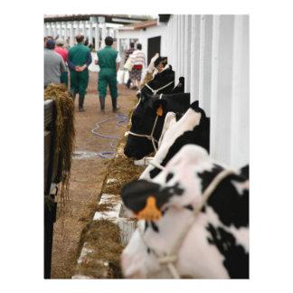 Holstein cattle show flyer