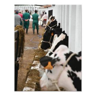 Holstein cattle show 4.25x5.5 paper invitation card