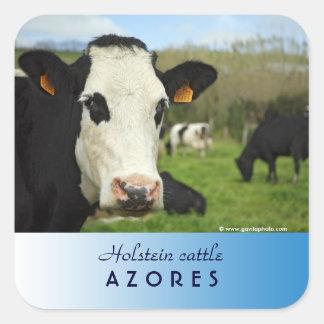 Holstein cattle square sticker